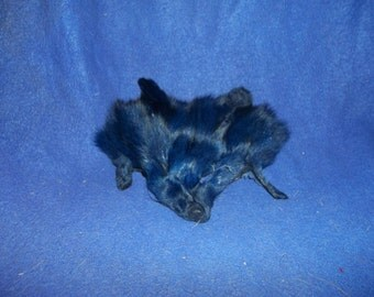 real animal fur Tanned dyed dark blue fox face head parts