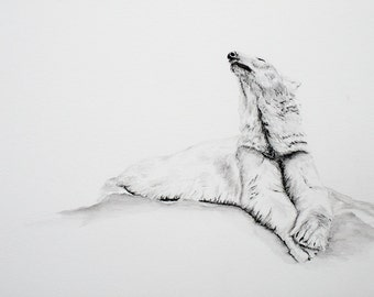 Polar Bear, Original Charcoal Watercolour painting print 10x8