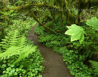 Forest Nature Photography Pacific Northwest Wall Art, Spring, path, lime green leaves, Fine Art Landscape Photo Print, rainforest, woods