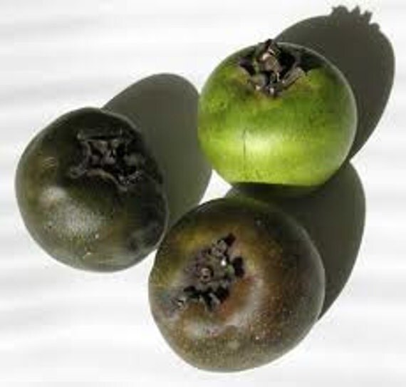 what does a star fruit taste like black sapote fruit
