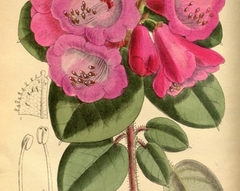 Victorian Flowers-Vintage Botanical Print-botanical art-vintage Album-Victorian gardening-Soft delicate