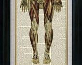 Human Anatomy 07 Vintage Illustration on Book Page Art Print (aca007)