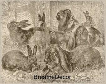Antique Vintage Bunny Rabbit Illustration Digital Download Art File Print