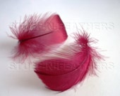 BURGUNDY GOOSE coquille feathers, 12 pieces - small curled feathers for millinery, crafts, feather flowers and more / F103-2/12