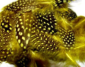 Loose Guinea Fowl Feathers - Yellow
