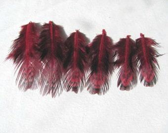 Ringneck Pheasant Feathers - Claret