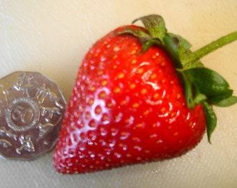 300 Giant Strawberry Seeds RARE Fragaria Ananassa Huge Fruit Bulk A1300