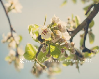 spring flower photo print - whimsical fine art nature photography, nursery art, wall art, pretty photo, white, pretty, floral, light