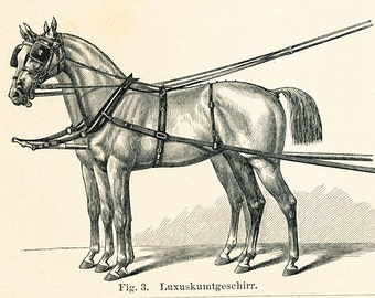 Carriage horse print  horse harnesses print  draft horse print horse collar horse carriage : Antique 1890s original engraving old book plate