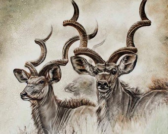 Kudu art, The Ghosts Of Africa, print of a couple of Kudu in Kimberley South Africa, Northern Cape, african artwork, antelope