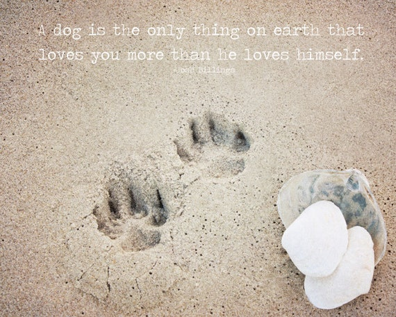 mans best friend paw prints in the sand with shells wall art