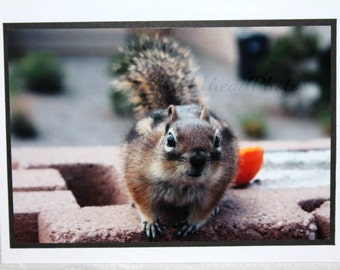 Photo Card, Curious Chipmunk photograph