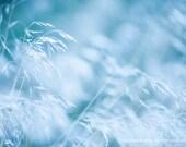 Dried Grass Winter Nature Botanic Mimimalistic -Blue White Pastel -Breeze Wind -Fine Art Photograph Print - Home Decor Wall Art