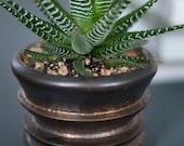 Porcelain Succulent Planter