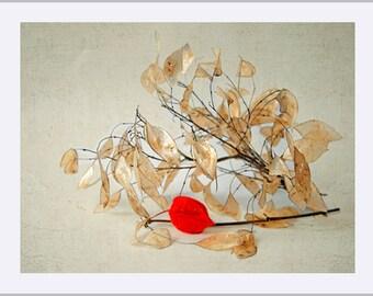 Flower Fine Art Print - Broun Red Flower Bouquet