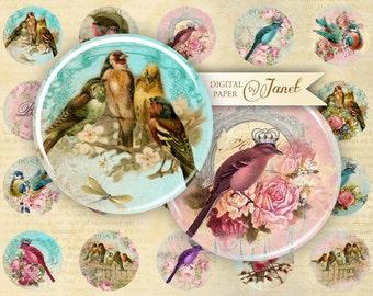 Bird Kingdom - circles image - digital collage sheet - 1 x 1 inch - Printable Download