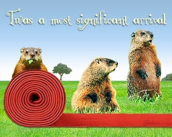 Funny Groundhog Birthday Card: Red Carpet Welcome