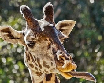Giraffe Kiss - Fine Art Photograph