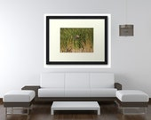 8x10 Fine Art Mallard Duck Print. Beautiful Home and Office Decor Artwork.