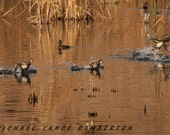 Ring Necked Duck - A Must Have For Your Waterfowl Lover.
