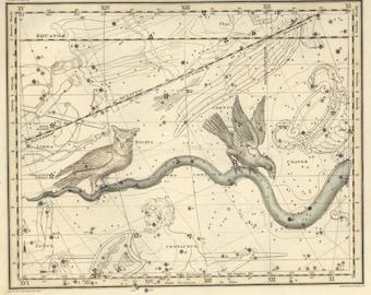 Constellation art, Constellation, Constellation print, Constellation of Hydra, 37
