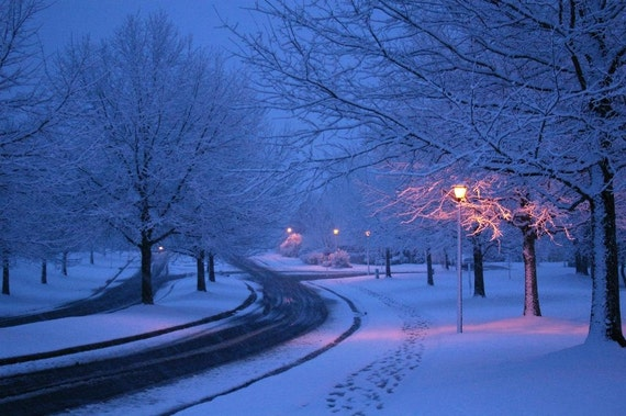 items similar to color photography snowy night trees