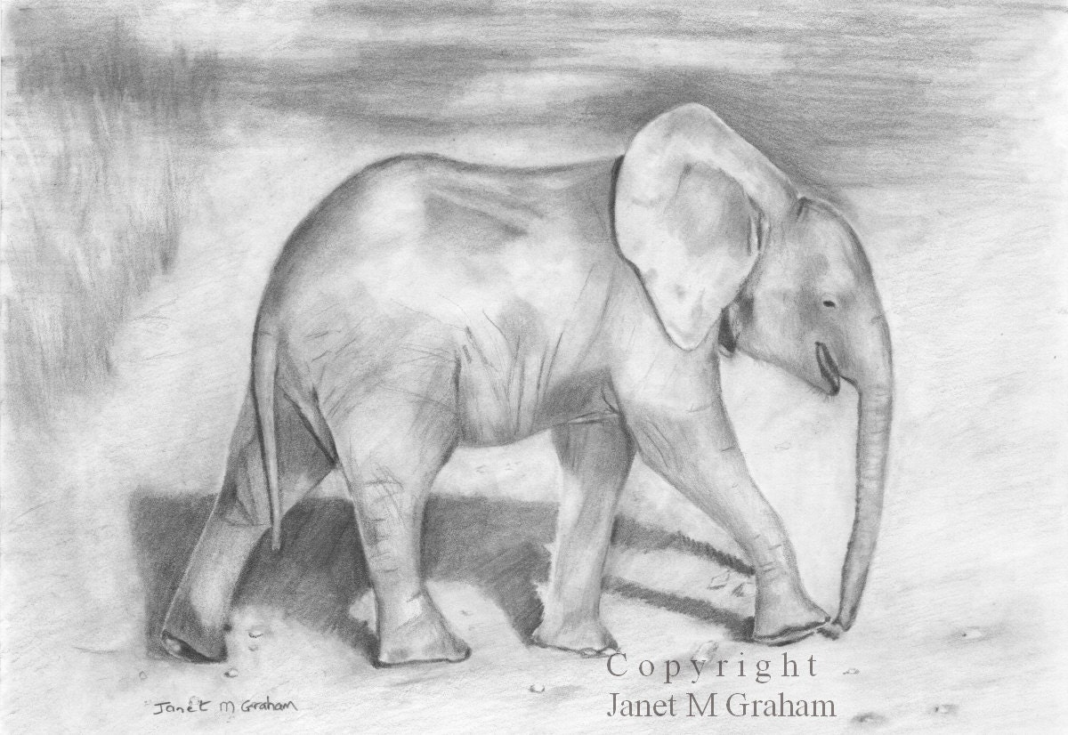 Pencil Drawings Of Baby Hands Baby elephant - an originalPencil Drawings Of Baby Elephants
