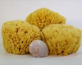 "Free Shipping 5-6"" Yellow Sea Sponge Full Form"