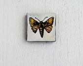 Tiny Moth Painting.  Tiny Art.  Original Oil Painting.  Insect. Nature.  Spring. - SorchaMoon
