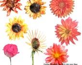 Clip Art, Digital Illustrations, Drawings, High Res, Royalty Free, Watercolor Flowers