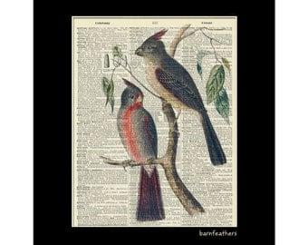 Vintage Illustration Desert Cardinal Bird Dictionary Art Print Book Page Art No. P100