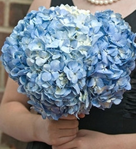 Blue Hydrangea Wedding Flowers: Bridal Bouquet Light Blue Hydrangea Hydrangea Bouquet Blue