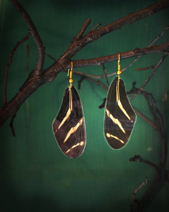 Real Striped Black White Zebra Butterfly Wing Earrings Triangle Animal Friendly Jewelry Epsteam Woodland Butterflies Science Gift Nature
