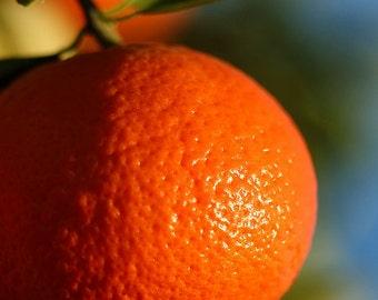 1/2 Ounce Tangerine Essential Oil