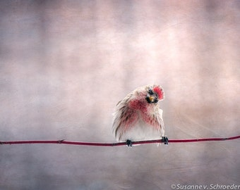Red Song Bird, Kid's Wall Art, Spring, Nature Photography, Fine Art Print, Saying Hello, Cute, Cheerful, Red Pink, Whimsical, Home Decor