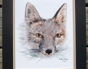 Watchful Fox Print