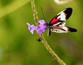 Butterfly Photograph Red White Black Purple Flower Nature Photography Home Nursery Office Fine Art Print Wall Decor fpoe