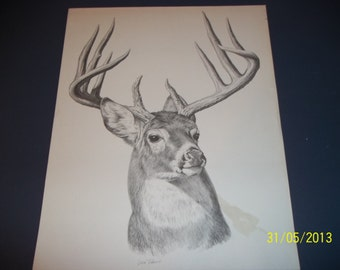 Vintage Leon Pearson Wildlife Drawing Print Whitetail Deer