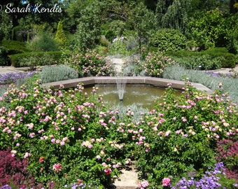 The Rose Garden (Photo Print) - Photography Gift - Nature, Floral, Fountain Photography