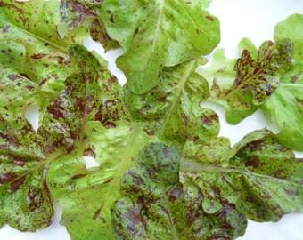 Flashy Butter Oak Lettuce seeds