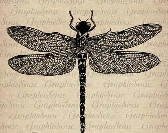 Devil's darning-needle - Dragonfly - Old Encyclopedia Illustration - Printable Graphics Digital Collage Sheet Image Download Transfer An79