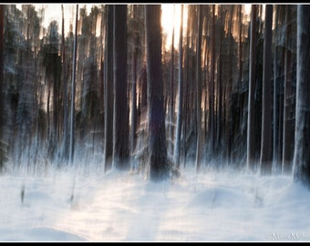 Dreamy Forest  Photographic Fine Art Print