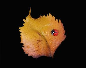 Silver Birch Leaf & Ladybird Brooch