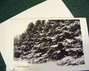 Winter Beauty note card