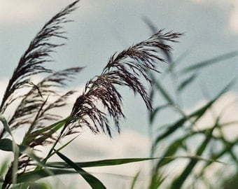 Rushes 8 x 12 fine art photography print