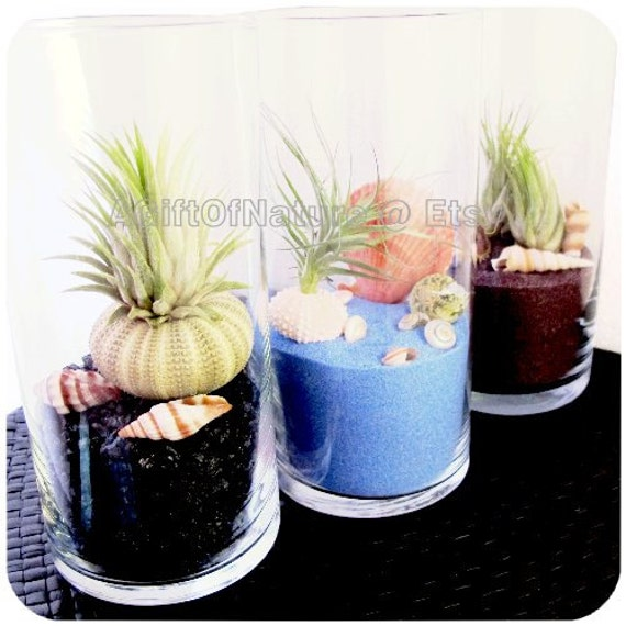 Urban Living Starter Set : Modern Tillandsia Vase For Home Decor Set Of 3 Pieces - Miniature Glass Terrarium Air Plant Kit