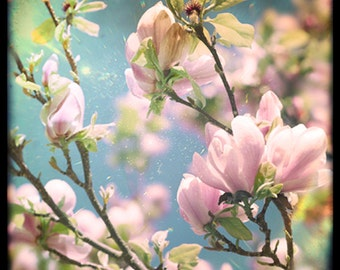 Nature photography, Magnolia, Buds, Flowers, Tree, Spring, Pink, Ttv, Vintage, Retro