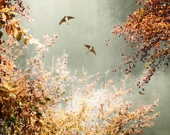 Nature photography, Swallows, Autumn trees, Fall, Birds, Nature, Wall Decor.