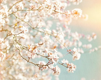 Nature Photography, Blossom, Spring, Pastel Colours, Sunny, Wall Art, Home Decor.