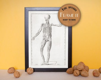 "Vintage illustration of figure with human circulatory system - framed fine art print, art of anatomy, 8""x10"" ; 11""x14"", FREE SHIPPING - 151"